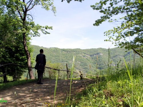 Passeggiate da Bruntino: da San Mauro fino alla Forcella di Camblì, nel fresco del bosco