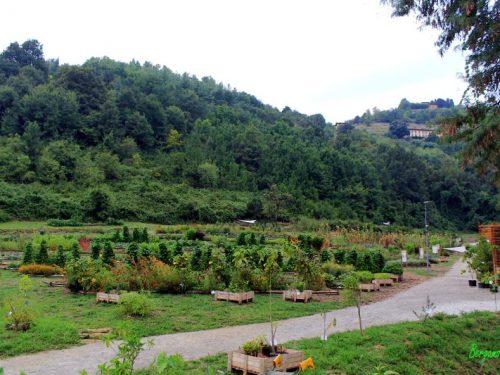 Orto Botanico ad Astino: alla scoperta della Valle della Biodiversità