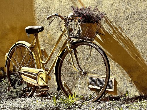 Albero degli zoccoli: alla scoperta dei luoghi con un tour in bicicletta